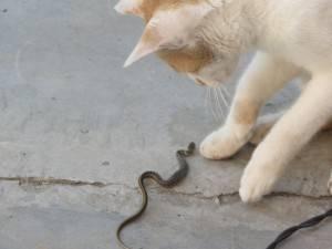 Фото глистов у кошек - какие паразиты живут у кошачьих