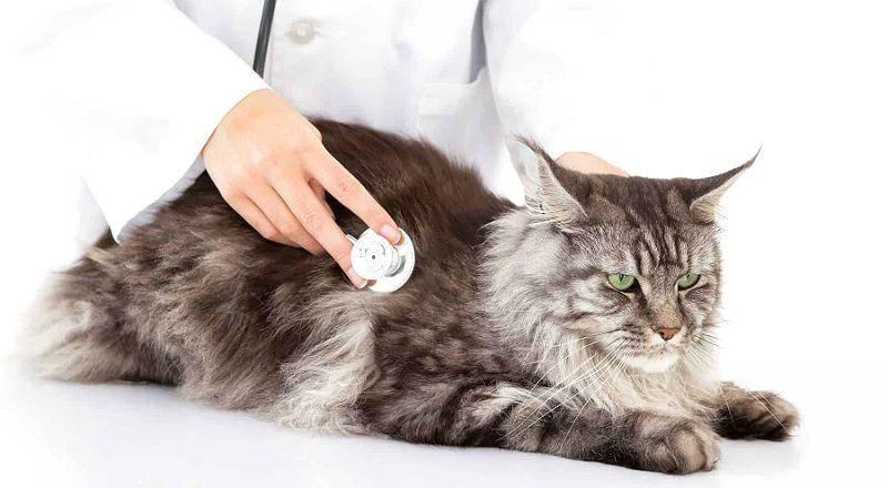 Как определить, что кошка больна: 18 признаков