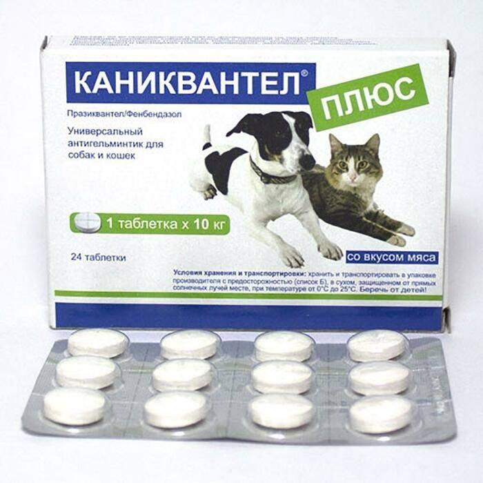 Как дать кошке таблетку от глистов: способы, меры предосторожности