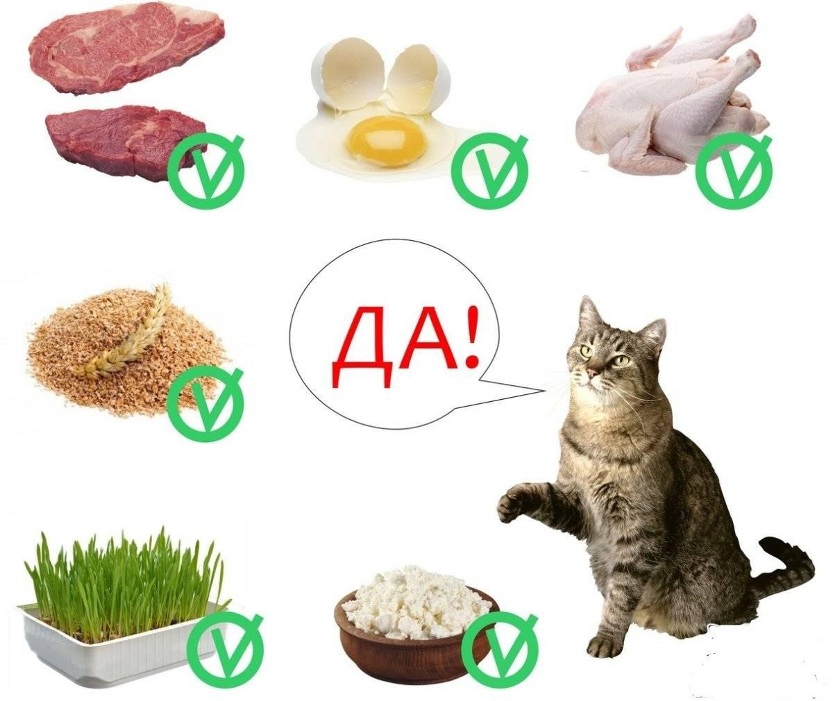 Как правильно переводить кота на другой корм. как перевести кота на новый корм? смена корма у кошек: когда нужна