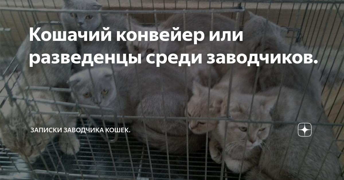Как отличить заводчика кошек от разведенца