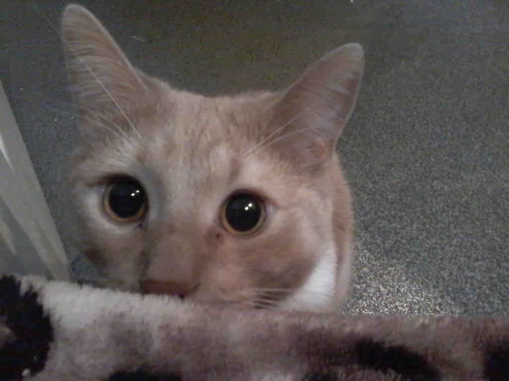 ᐉ память у кошек: есть ли она, какая и сколько длится - kcc-zoo.ru