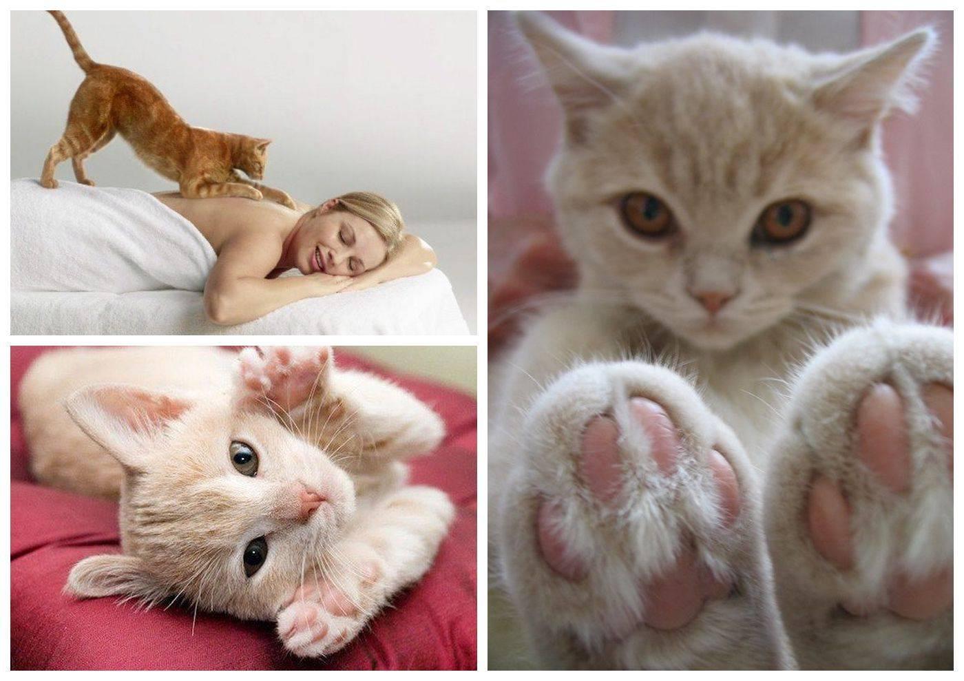 Почему кошка топчет вас лапками? мы нашли ответ