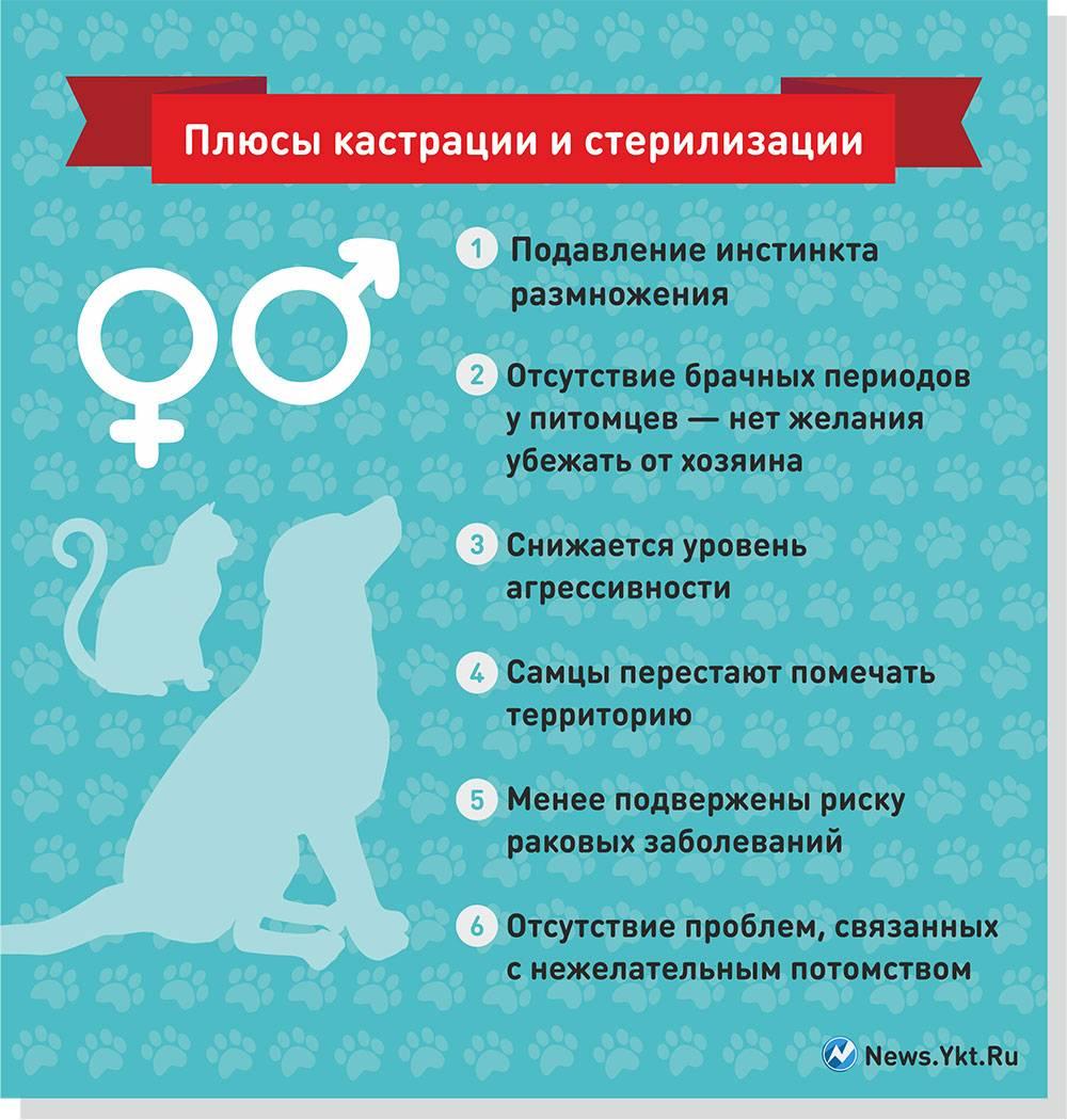 Химическая кастрация кошек: механизм процедуры, плюсы и минусы