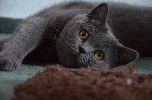 В каком возрасте кастрируют котов - возможные проблемы, уход