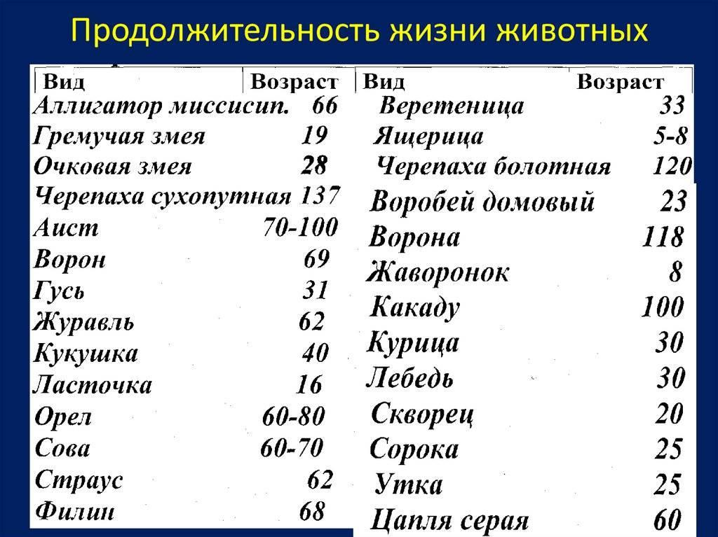 Восточносибирская лайка: описание внешнего вида, содержание, уход и воспитание