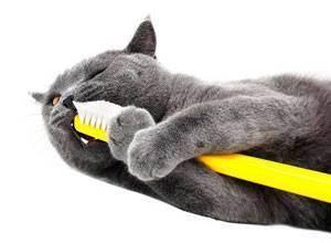 Какие существуют виды стерилизации кошек и собак?