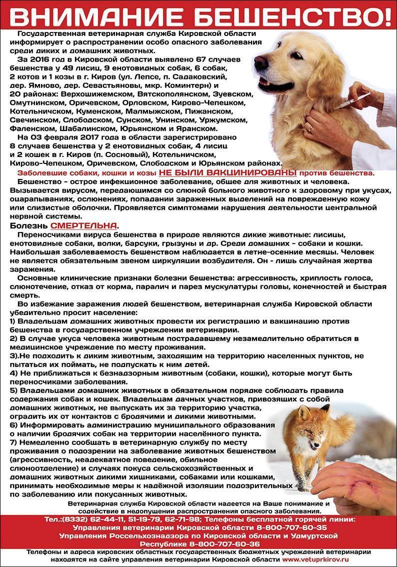 Как кошки могут заразиться бешенством: основные пути инфицирования, симптомы