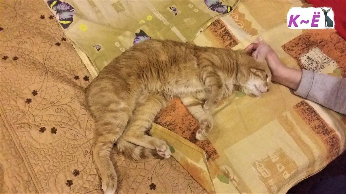 Кормим правильно стерилизованную кошку в домашних условиях: чем должен отличаться корм, какой лучше. питание кошки после болезни или операции и кормить кошку после стерилизации