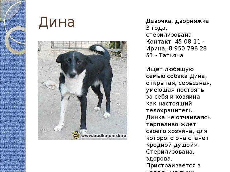 Дворняжка (32 фото): описание беспородных щенков дворняг. как приручить бездомную собаку без породы и правильно ее воспитывать? маленькие рыжие и черные дворняжки