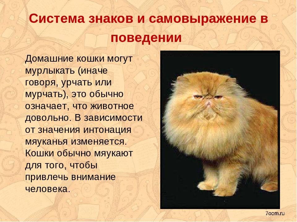 Кошки мурлыкают: какие причины этого и механизм мурканья у кошачих