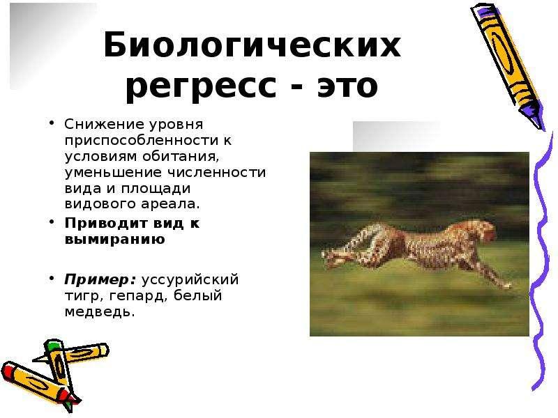 Рысь – фото, описание, ареал, питание, размножение