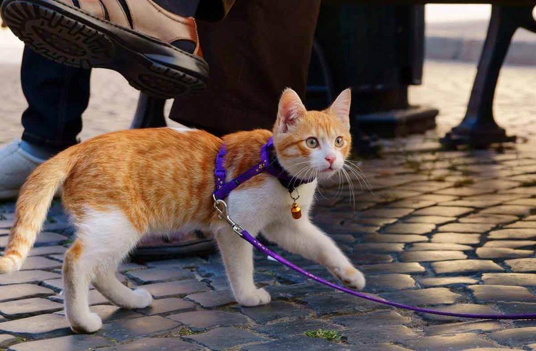 Кошка на прогулке | мои домашние питомцы
