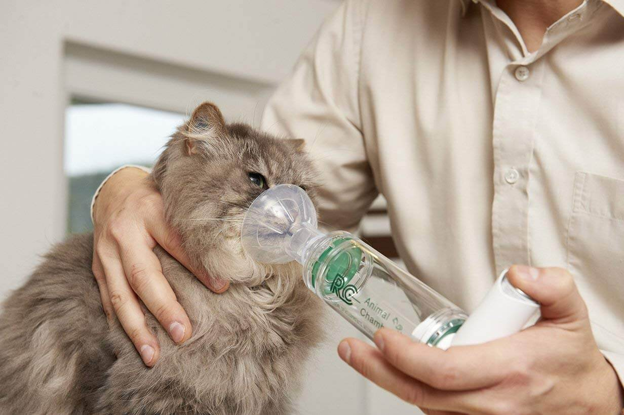 Почему кот или кошка кашляет