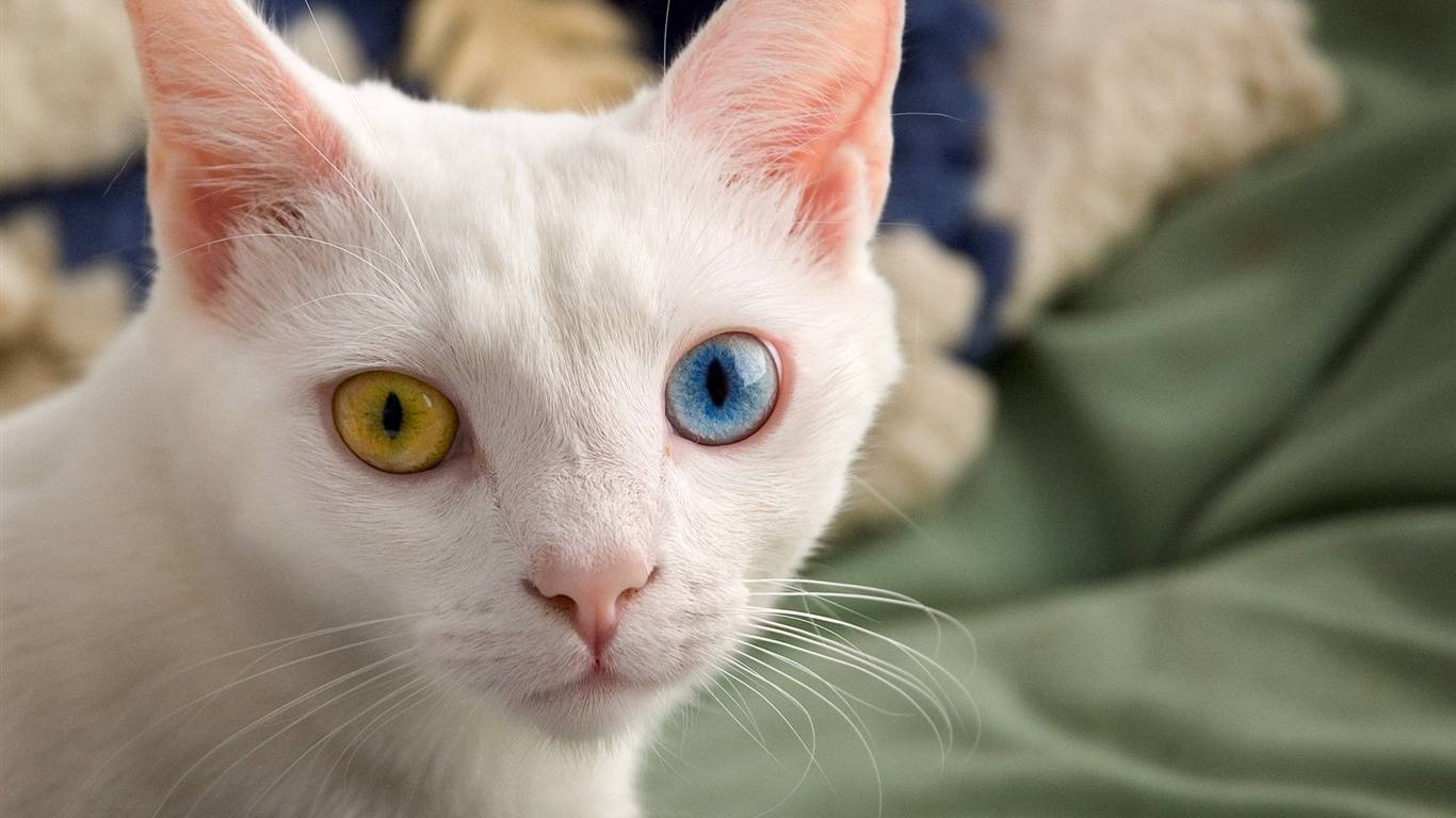 Опасны ли коричневые выделения в глазах у кошки и когда нужно обращаться к ветеринару?