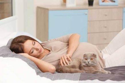Почему беременным нельзя гладить кошек: «бабушкины» приметы и реальные угрозы