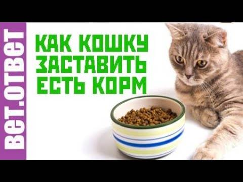 Как приучить котенка к сухому корму: выбираем корм и марку, вводим смешанное питание