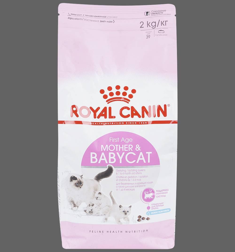 Как правильно кормить кошку влажным кормом: советы ветеринара