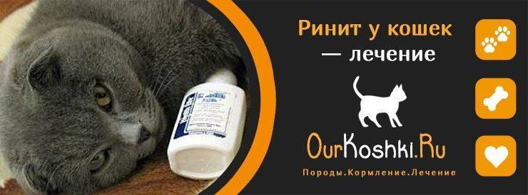 Ринит (насморк) у кошек и котов - симптомы, лечение, препараты, причины появления | наши лучшие друзья