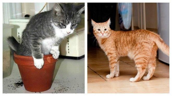 Правила и рекомендации, как отучить кота метить территорию