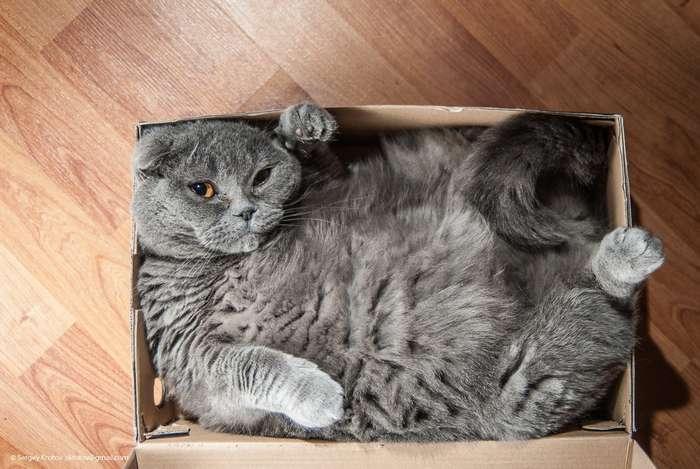 Почему коты любят сидеть в пустых коробках и пакетах?