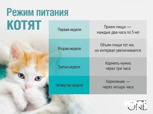 Можно ли кошкам молоко – вся правда о молочном продукте