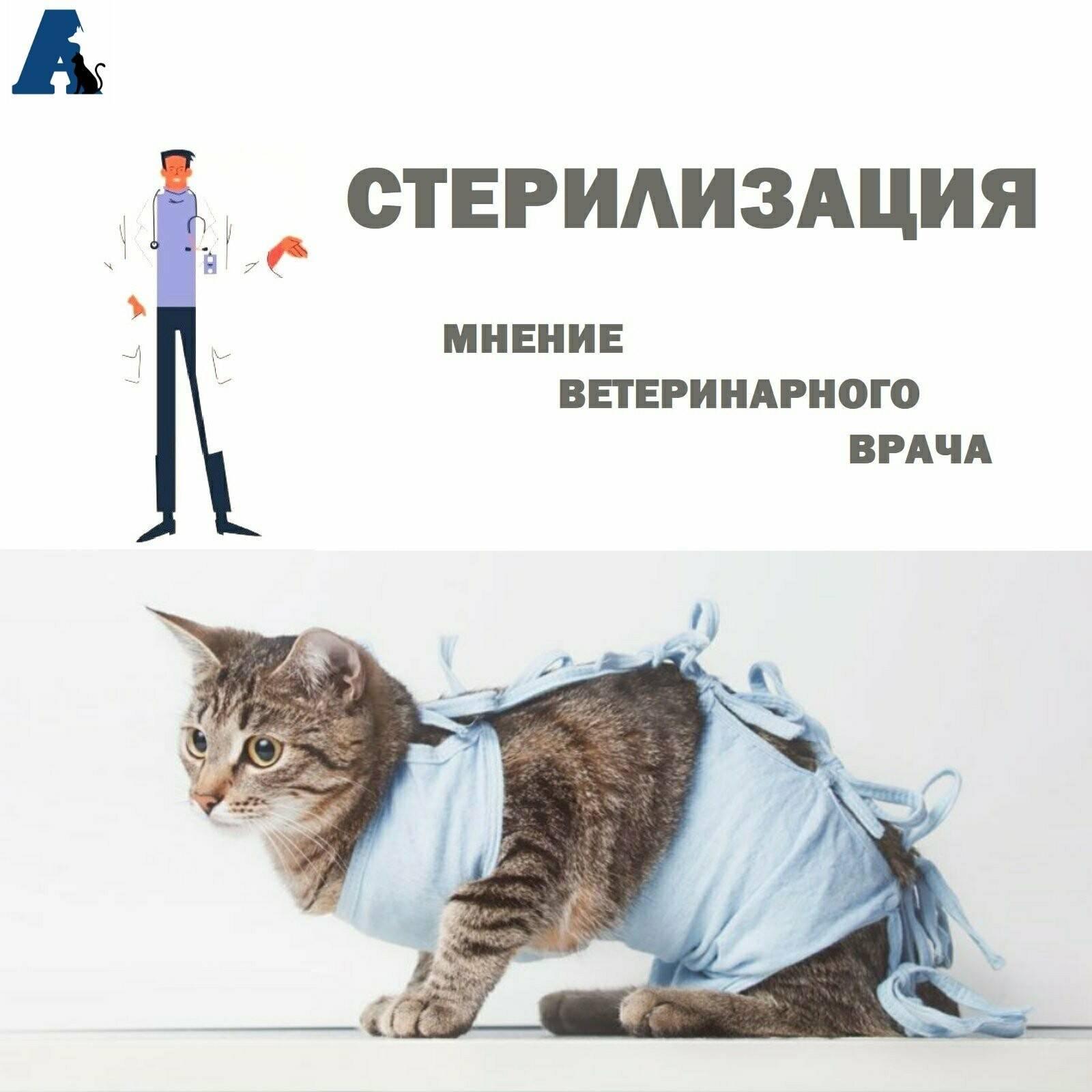 Виды и способы стерилизации кошек: какой лучше, особенности проведения и уход