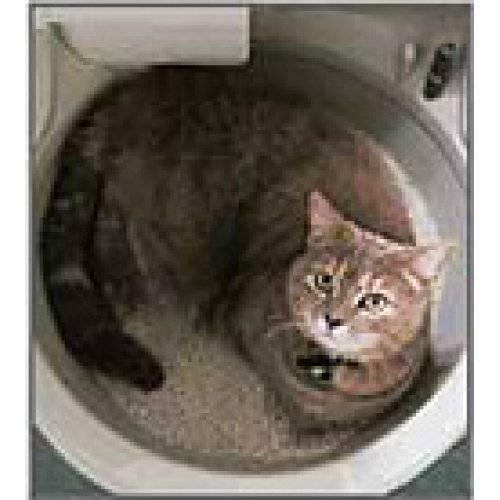 Обзор видов и брендов туалетов для кошек — без запаха, автомат с сеткой, вертикальный белый бокс и другие