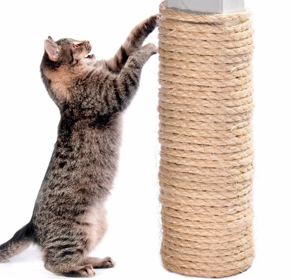 Как отучить кота или кошку драть обои и мебель, что делать, чтобы приучить питомца к когтеточке?