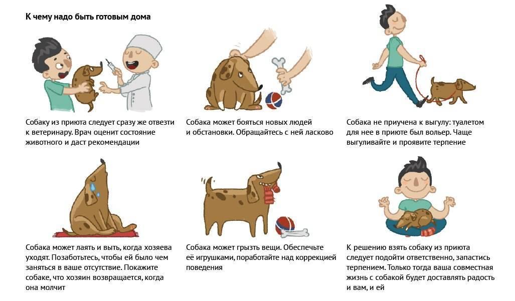 9 способов - как успокоить кошку во время течки