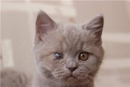 У кошки слезится один глаз: причины выделений, что делать в домашних условиях, методы лечения