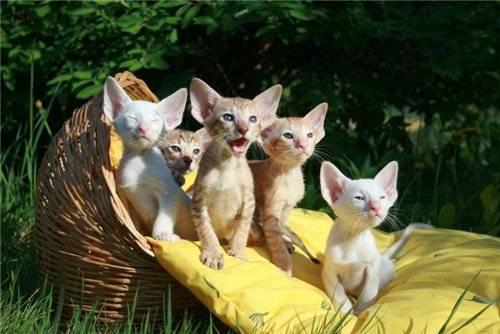 С чего начать разведение кошек как бизнес. бизнес на разведении породистых кошек - лечение