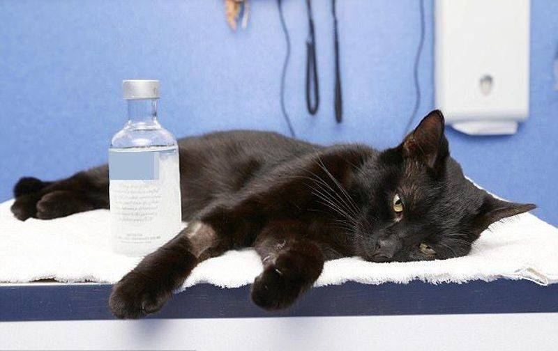 Лечения кошки при отравлении