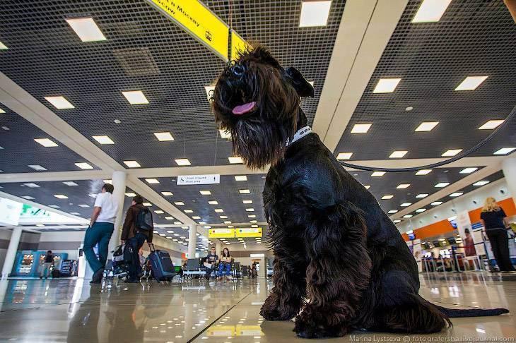 Транспортировка животных самолетом по россии — правила