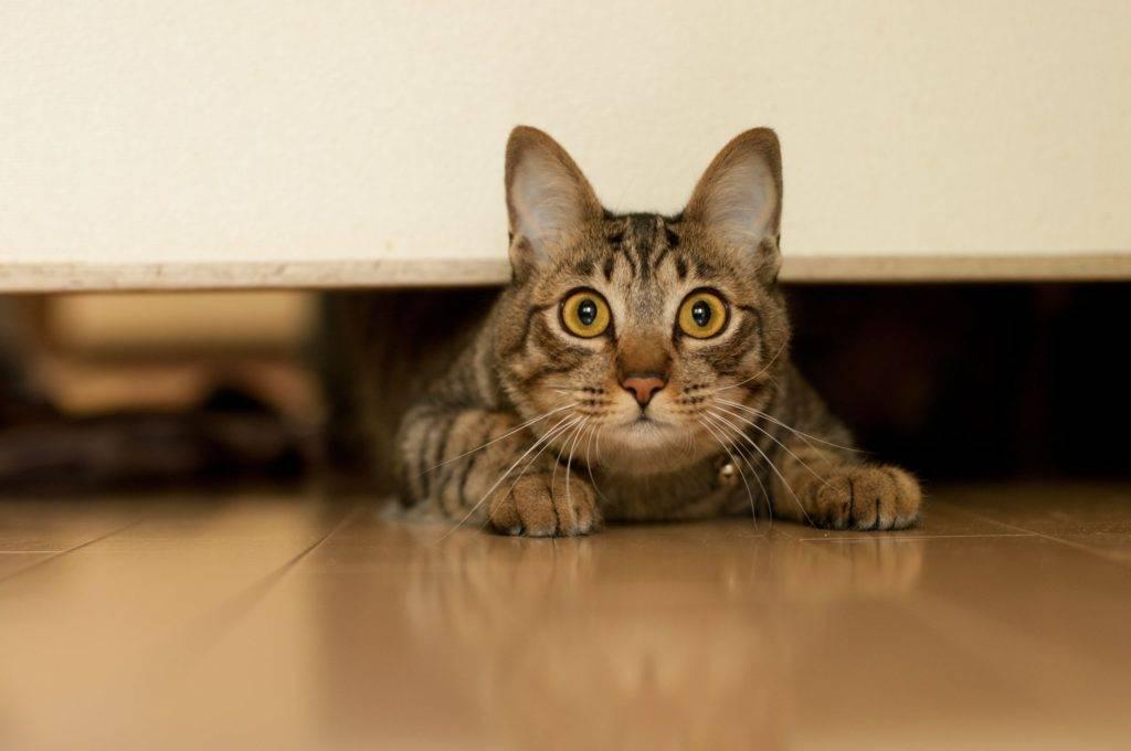 Что говорит примета, если в доме не приживаются кошки
