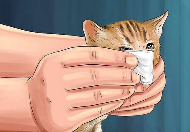Простуда у кошек — симптомы и лечение, профилактика
