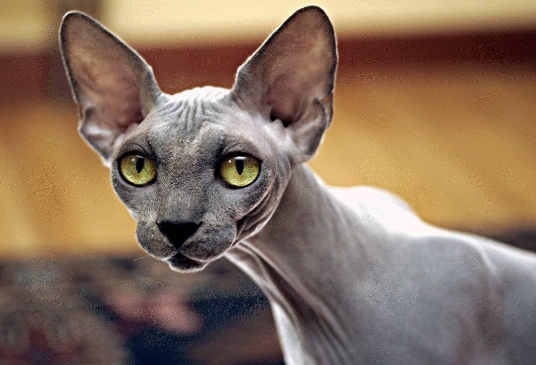 Интересные факты о кошках: удивительные, необычные и забавные факты о домашних котах