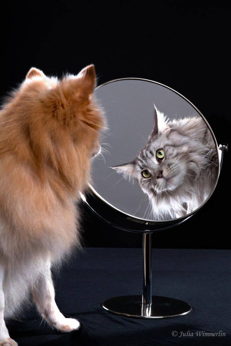 Способна ли кошка узнать себя в зеркале?