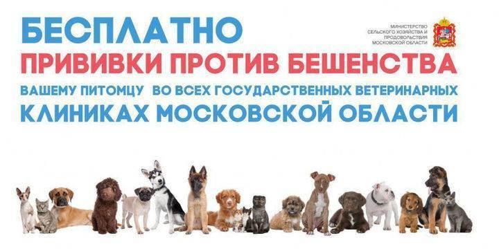 Прививки для собак: какие делают и когда?