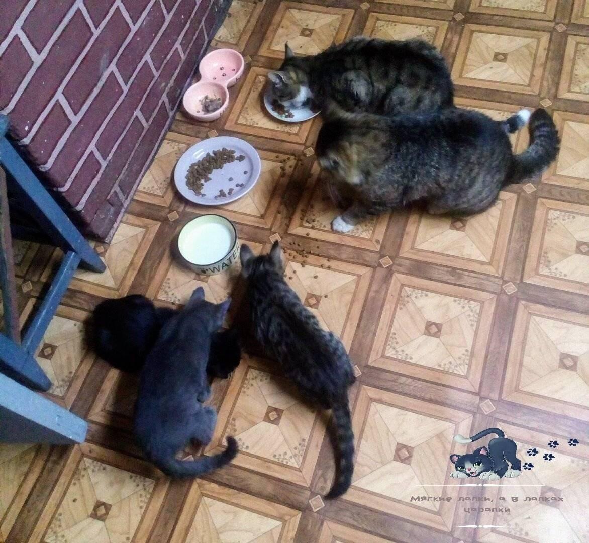 Чем кормить кошку после операции: важные особенности восстановления