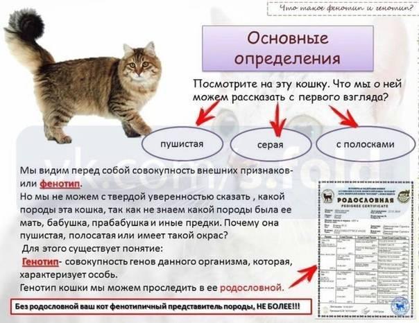 Как определить пол котенка: 6 эффективных методов