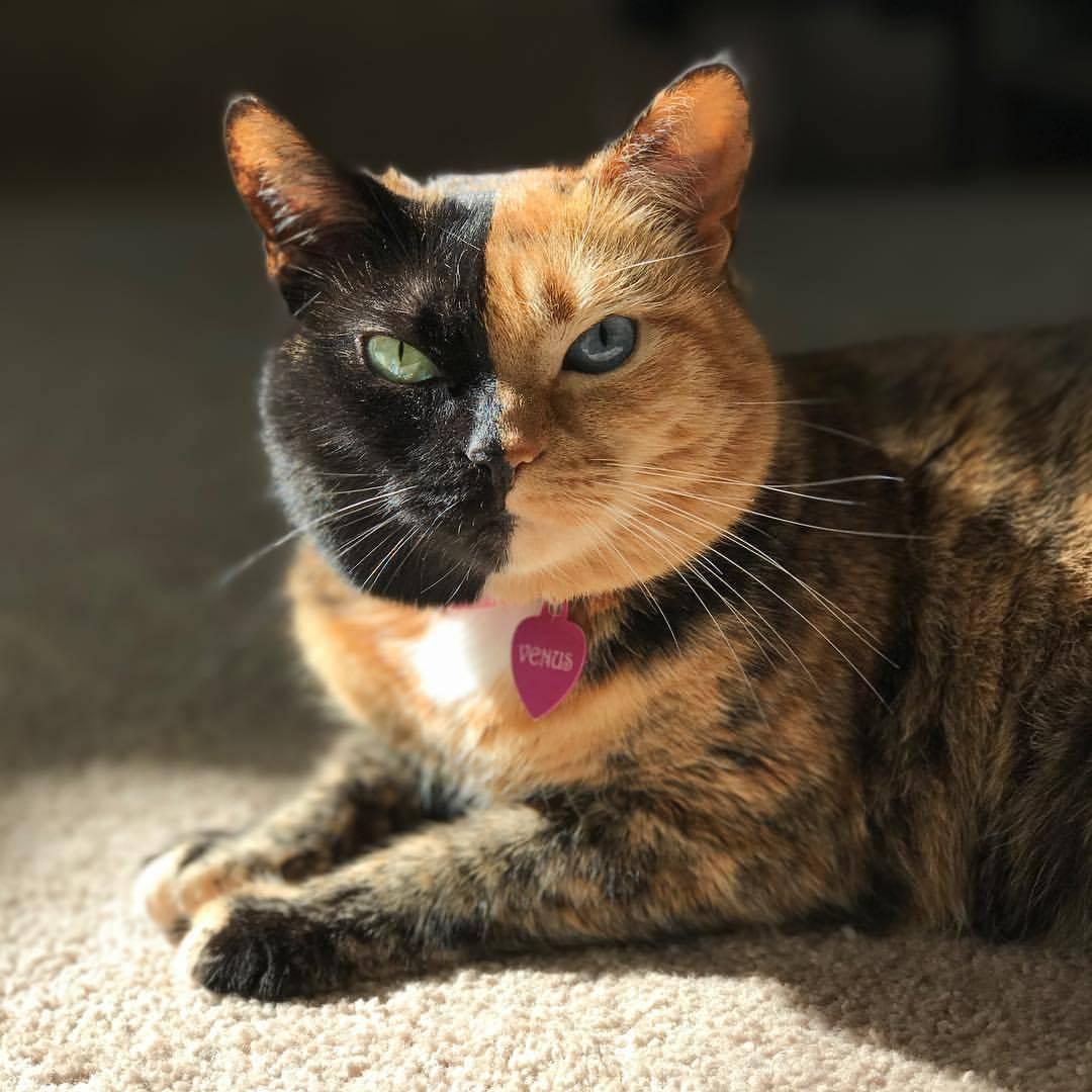 Самые редкие породы кошек с фотографиями — изучаем вопрос