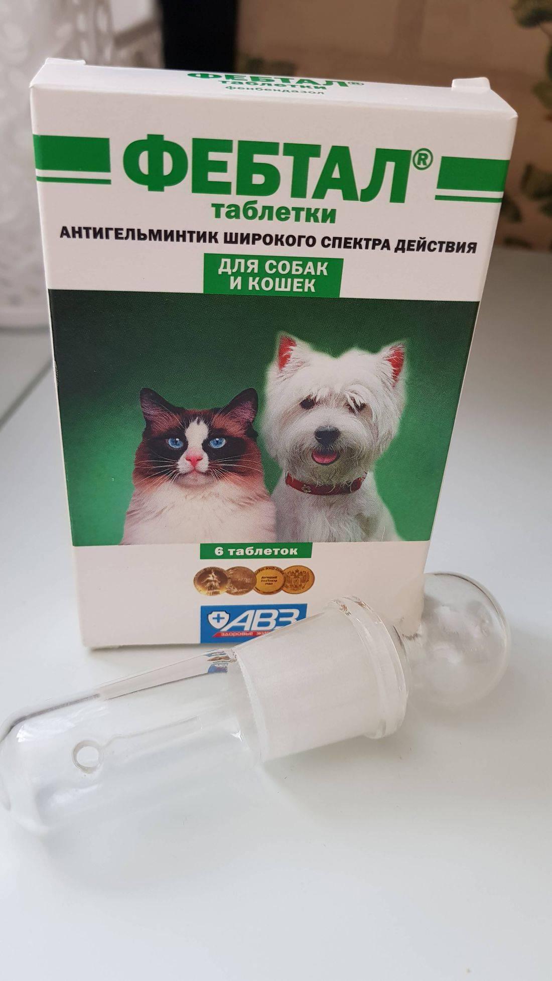 Фебтал комбо для собак инструкция по применению. инструкция по применению антигельминтика фебтал. состав и фармакологические свойства - новая медицина