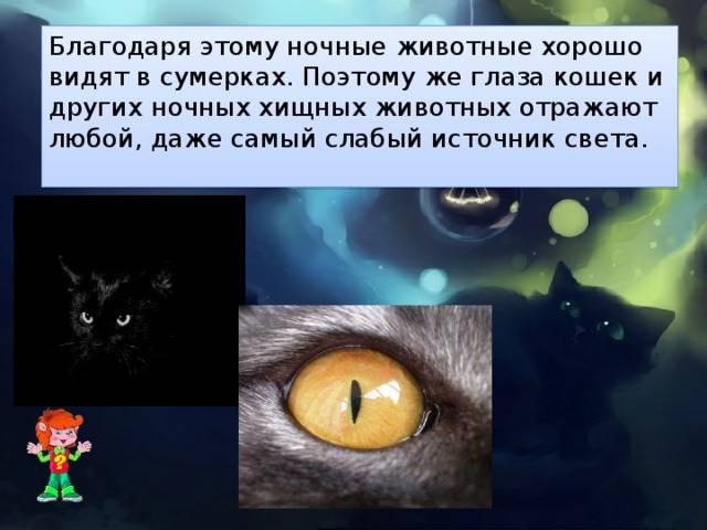 Почему у кошек в темноте светятся глаза? основные причины. почему бывает красное, зеленое и другое свечение глаз у котов ночью?