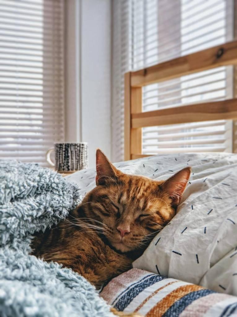Правильная забота о кошке после операции по стерелизации