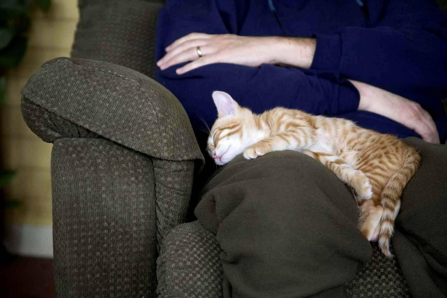 Почему кошки спят в ногах человека, кот ложится сверху на ноги человеку по 5 причинам