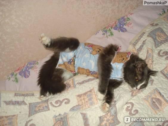 Кошка не ест после стерилизации и не пьет