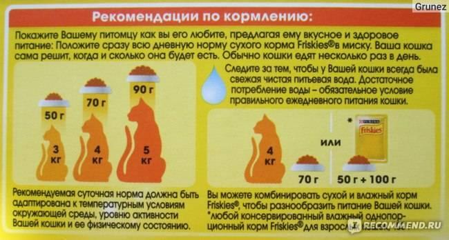 Можно ли кормить кота сухим и влажным кормом?
