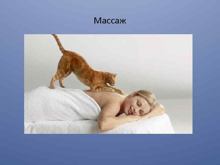 Какие коты лечат людей и как выбрать пушистого целителя?
