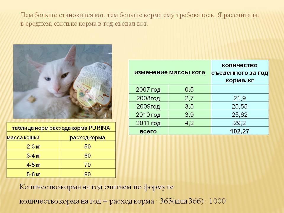 Кормление новорожденных котят